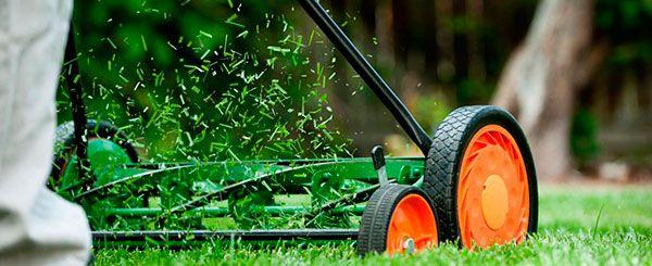 Cuidamos y controlamos la salud del jardin de su Comunidad