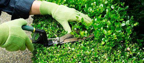 Servicios de jardineria en Madrid