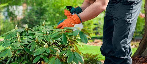 servicios integrales de jardineria madrid