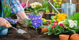 Las mejores flores para plantar en Marzo