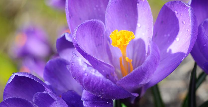 1620845990 671 Descubre las flores de primavera para plantar en marzo