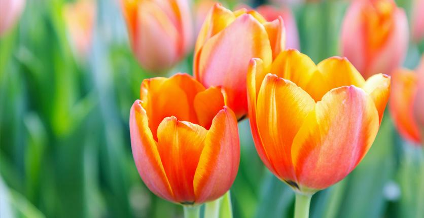 Descubre las flores de primavera para plantar en marzo